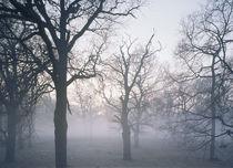 Elbauen im Nebel by Sebastian Kaps