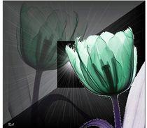 Tulpe  by netteart