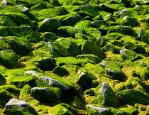 Moosis Steine von frauhuhn