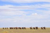 Kamel Karawane - Mongolei by Johann Loigge