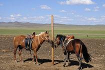 Pferde by Johann Loigge