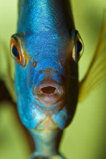 Diskus Blau by macropolis
