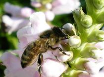 Blume mit Biene von lisafotografie