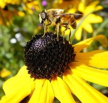 Gelbe Blume mit Biene von lisafotografie