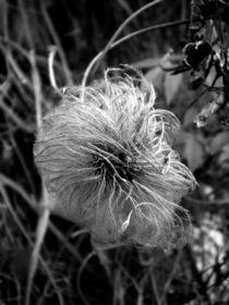 Eisblume von lisafotografie