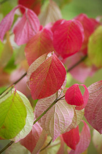Colorful leafs by AD DESIGN Photo + PhotoArt