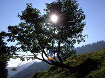 Sonne im Bergahorn von sansara