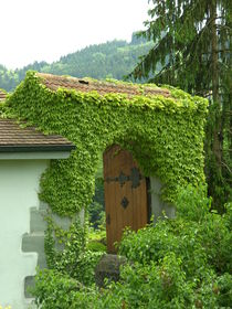Durchgang in Grün von sansara