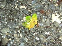 Herbstblatt by sansara