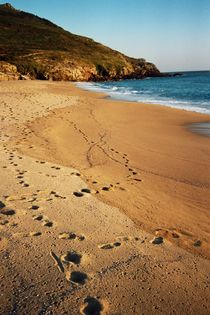 Spuren im Sand by sansara