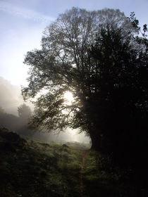 Morgenlicht von sansara