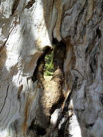 Baumfenster von sansara