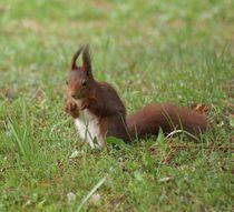 Eichhörnchen Pfötchen by kattobello