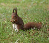 Eichhörnchen Dinner by kattobello