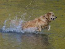 Goldie im Golden Water von kattobello