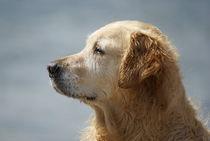 Goldie Profil von kattobello