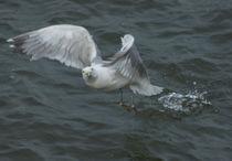 Flug übers Wattenmeer von kattobello