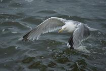 Flug über die Nordsee von kattobello