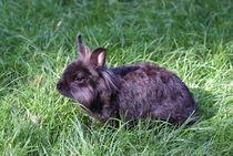 Beauty Black Bunny von kattobello