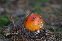Pilzgeburt by kattobello