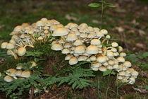 Pilztreffen von kattobello