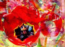 Tulpenart von Matthias Rehme