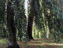 Baumgruppe am Alsterwanderweg by peter norden