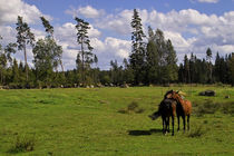 Horses von eyefulcityandnature