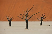 Deadvlei by Günter Franz Müller