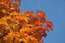 Herbstlaub by Nils Kappel