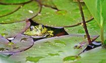 'Froschprinz' von inti