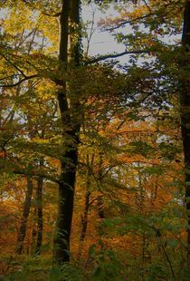 Herbstgold im Wald by inti