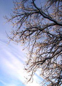 Winterimpression by inti