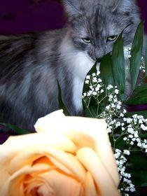 Rosen und Katzen  können kratzen von inti