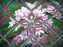 RomantischerBlick in den Frühling by inti