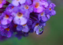 Wassertropfen statt Schmetterling von inti