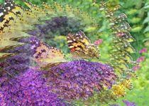 Zauberei im Reich der Schmetterlinge von inti