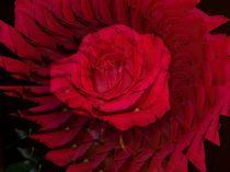 Spiel mit der Rose by inti