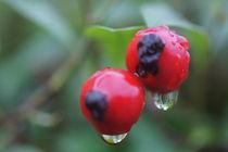Herbstregen by inti