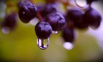 Regen im Herbst by inti