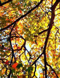 Blätterdach by inti