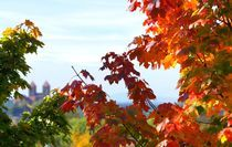 Ein Tag im Herbst von inti