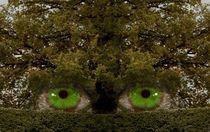 HOLZ  Der Geist der Bäume von inti