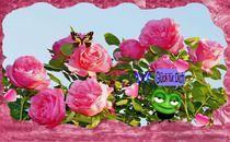 Titelbild  Rosenkalender von inti