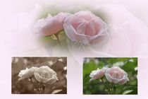 Rosa Collage by inti
