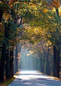 Die Strasse in den Zauberwald by inti