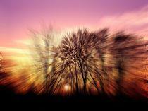 Energiebild  Sonnenuntergang von inti