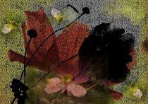 Blüten - ihre Schönheit und Vergänglichkeit von inti
