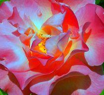 Heißer Sonnenschein und Rosenwirbel von inti