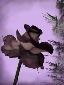 ...Wenn die Rosen Trauer tragen...  Variante II von inti